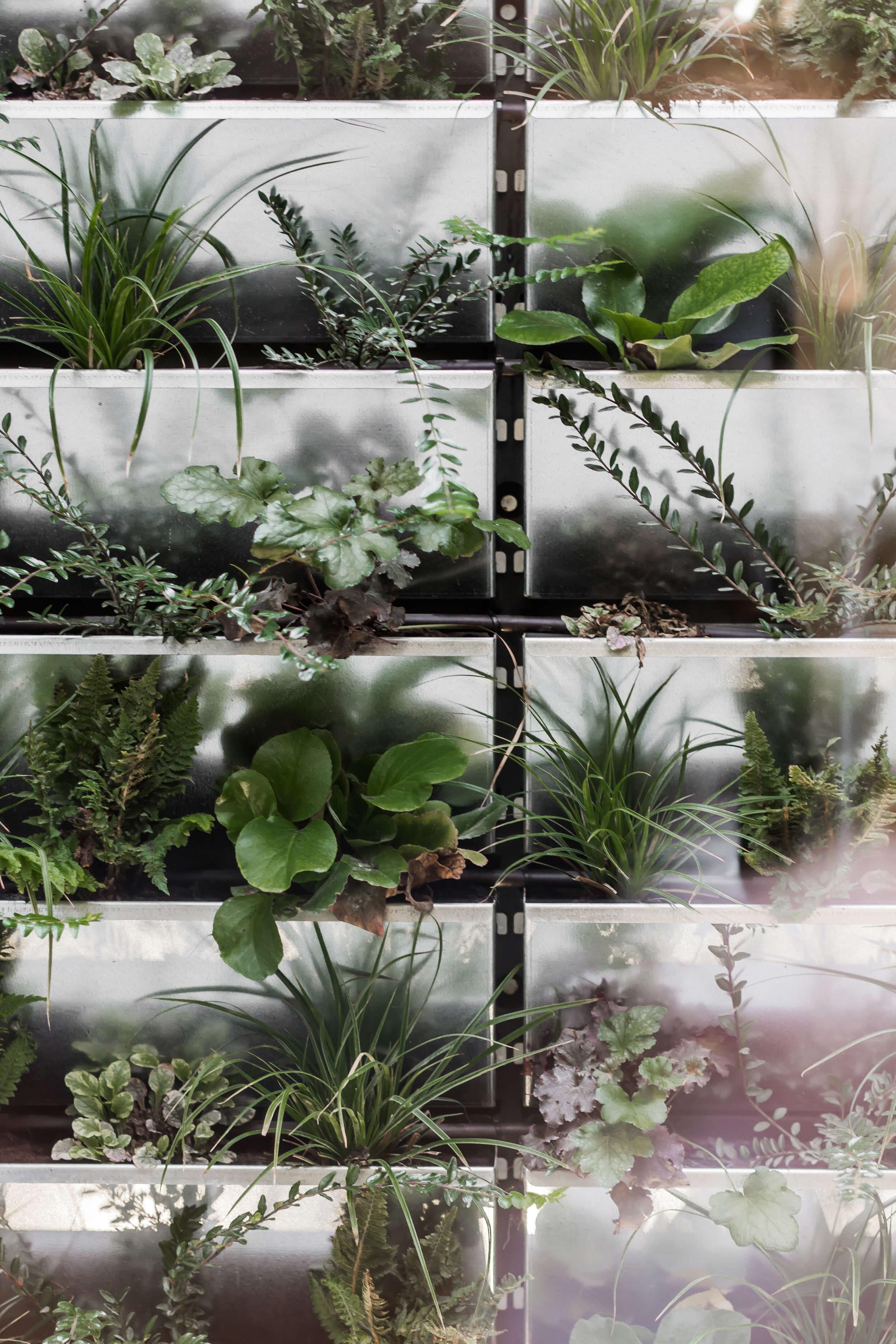 Muro Vegetal
