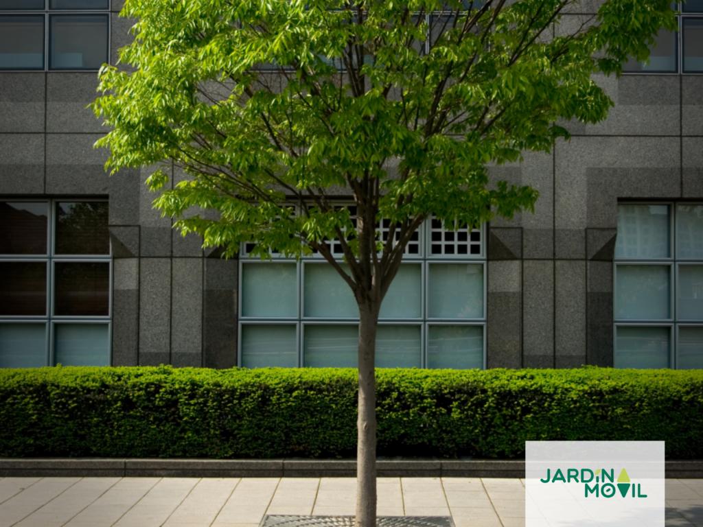 Soluciones para los árboles de las zonas urbanas.